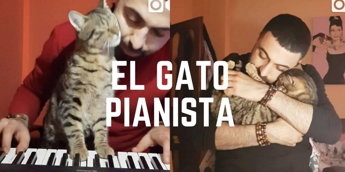 ¡Mire la curiosa reacción de un gato cuando le tocan piano!