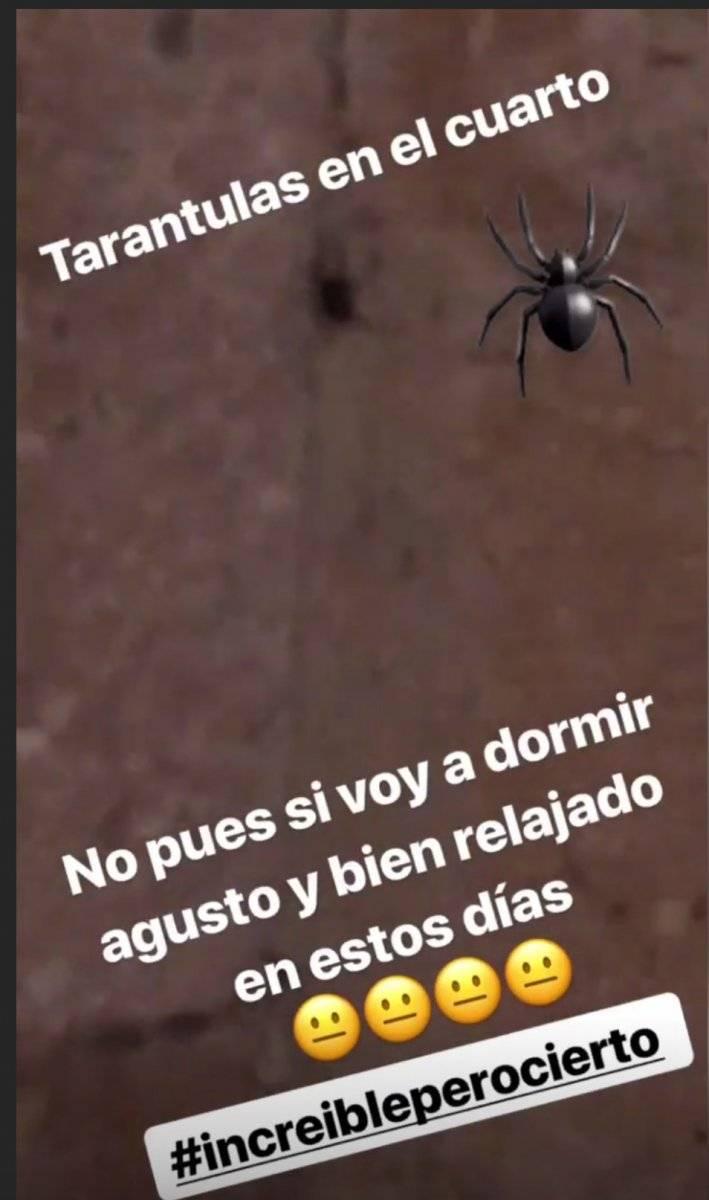 Araña en cuarto de Pulido