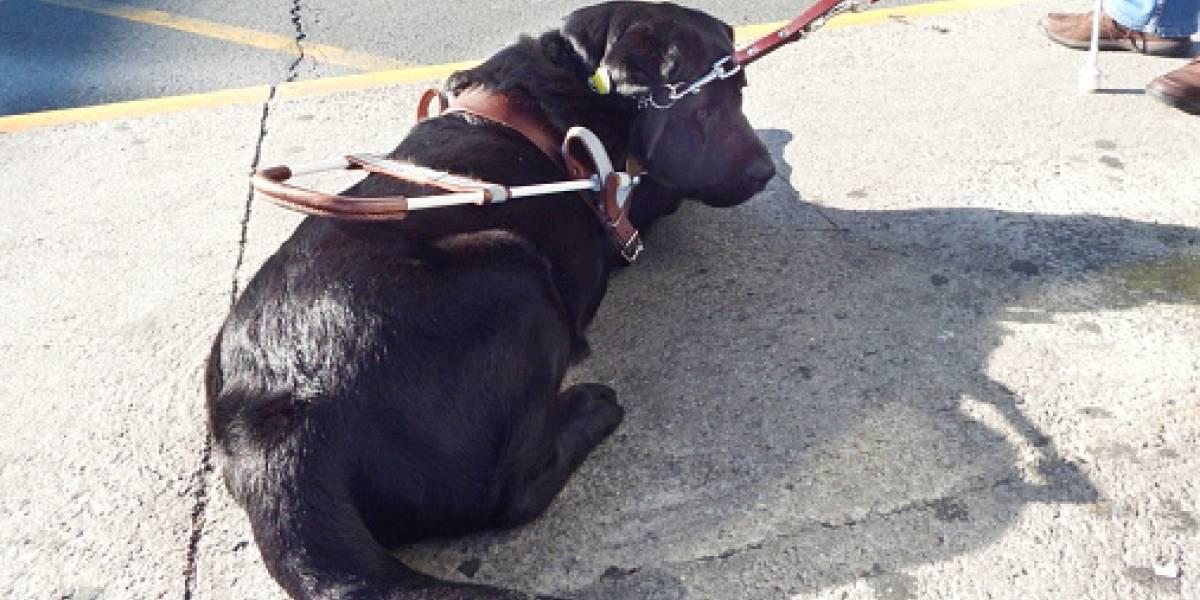"""""""No, no damos agua a animales"""": cafetería genera polémica por negarse a atender a perro guía después de trabajar incansablemente"""