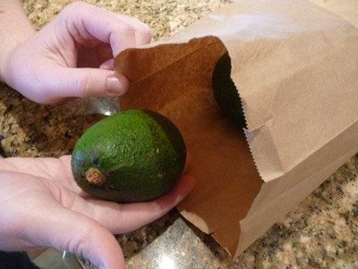 avocado bag paper