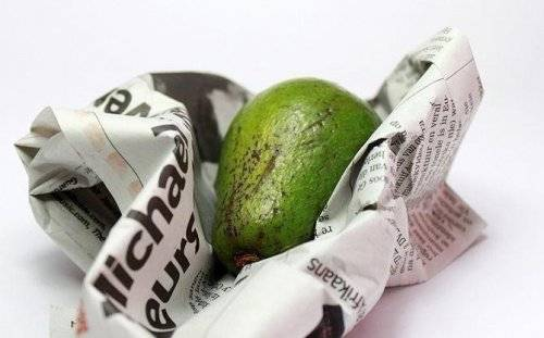 aguacate paper