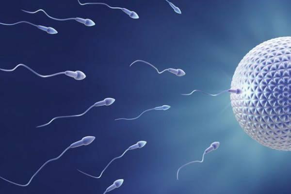 Alimentos para mejorar el espermatozoide