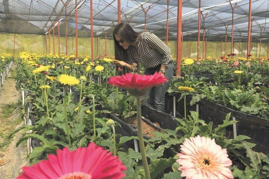 74fb0d06f Jardín Constanza realiza Tours de las flores | Metro Republica ...