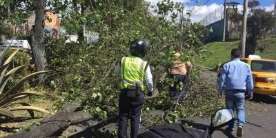 Quito: Fuerte congestión vehicular sobre la avenida Amazonas y Eloy Alfaro