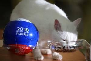 Gato Aquiles predijo que gana Rusia frente a Egipto: