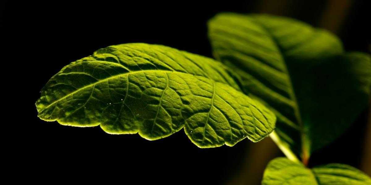 Se descubre un nuevo tipo de fotosíntesis que sobrepasa los límites de las plantas comunes