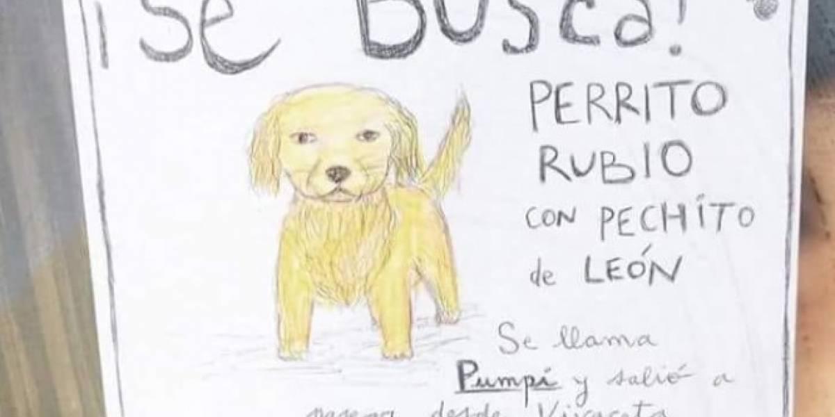 """Lo mejor es el final de la historia: Perdió a su perrito """"pechito de león"""" y las redes se enternecieron con su cartel de """"Se Busca"""""""