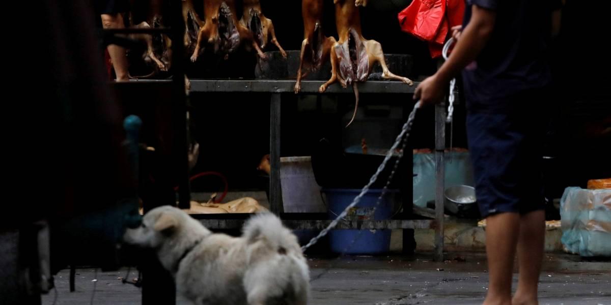 Festival de carne de cachorro abre o verão na China