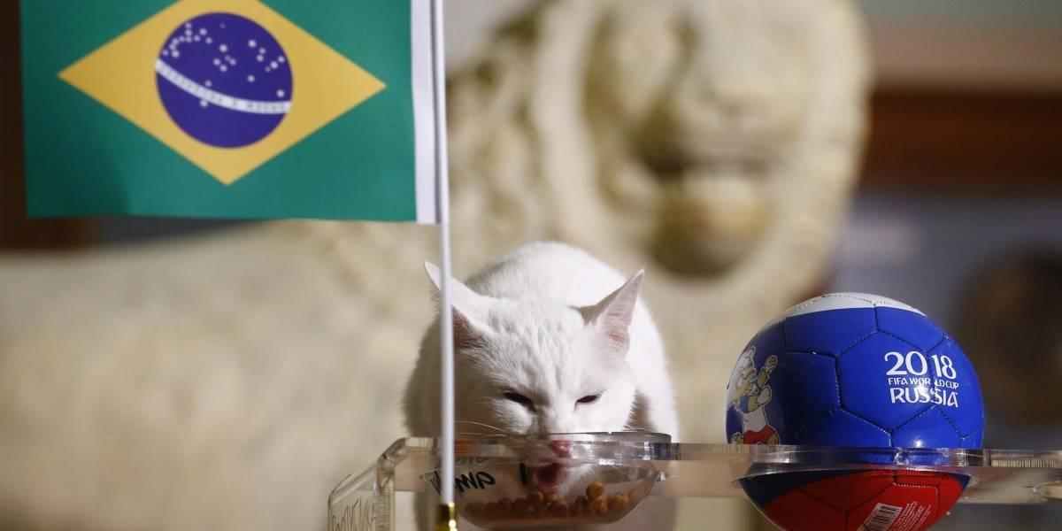 Conheça Aquiles, o gato que previu a vitória do Brasil contra a Costa Rica