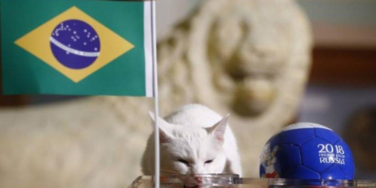 Copa do Mundo: Gato Aquiles prevê vencedor do jogo Brasil x Costa Rica