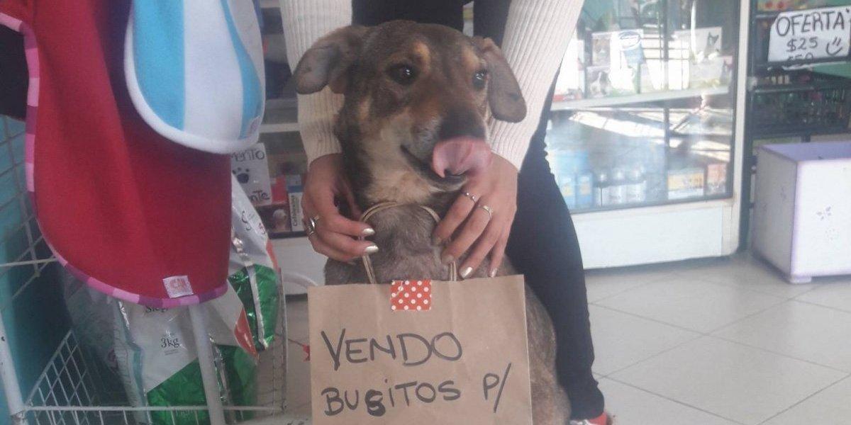 ¡Ayudemos a Norberto!: la historia del perrito que vende ropa para pagar su tratamiento contra el cáncer que hace llorar a todos en Facebook