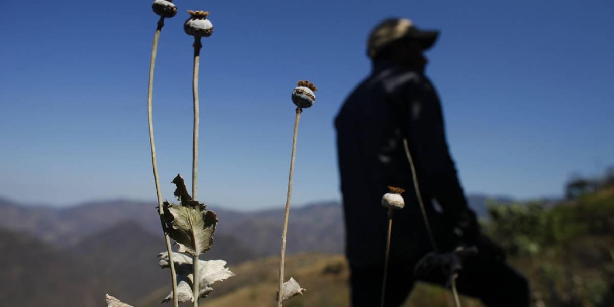 El particular giro productivo en México: productores de opio se cambian a la marihuana por mejores precios
