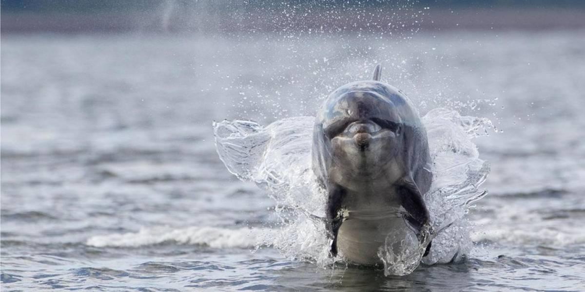 """Os """"detetives"""" que tentam desvendar a morte de golfinhos"""