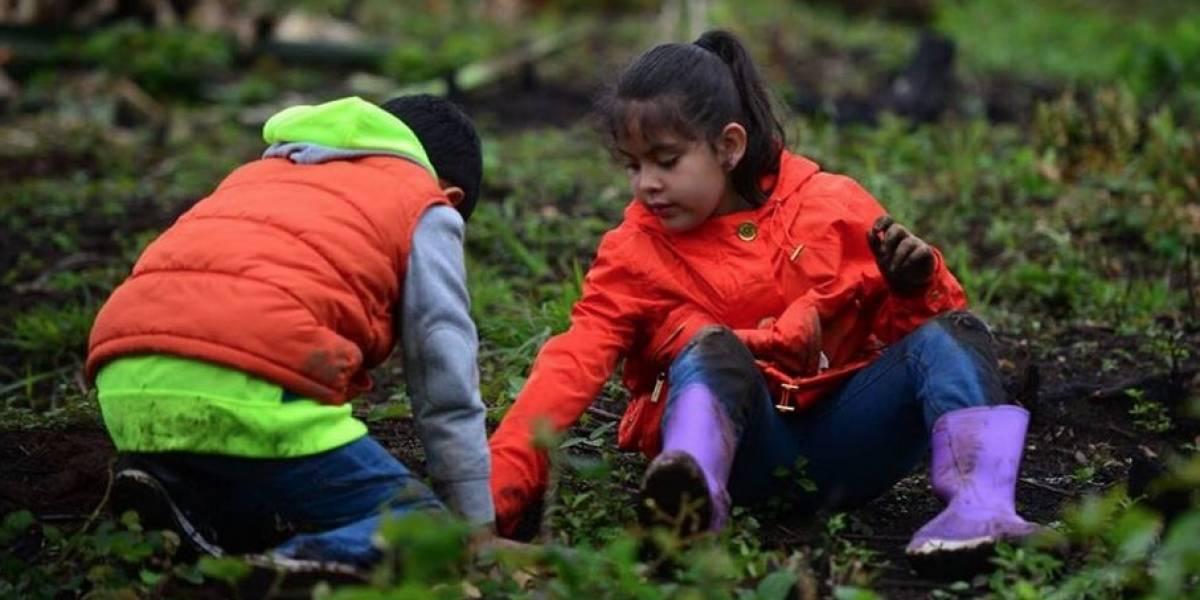 Vecinos colaboran para reforestar finca que fue incendiada en Mixco