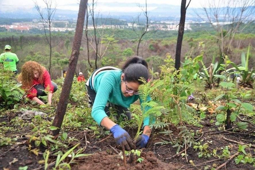 Vecinas participan en la siembra de árboles.