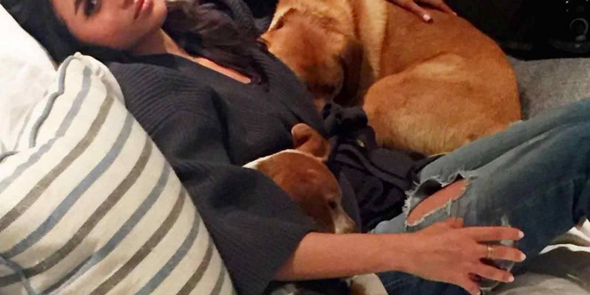El perro que Meghan rescató de ser sacrificado ahora es el consentido de la Reina Isabel