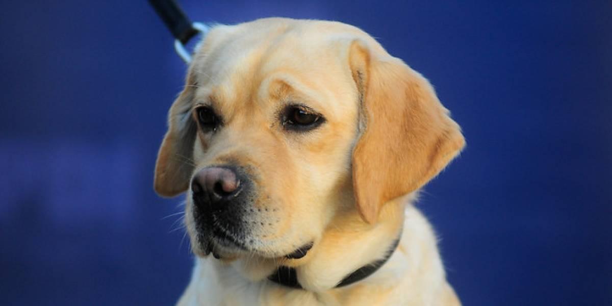 Tenencia responsable: Expertos desmienten estudios que califican de cancerígenos los chips para mascotas