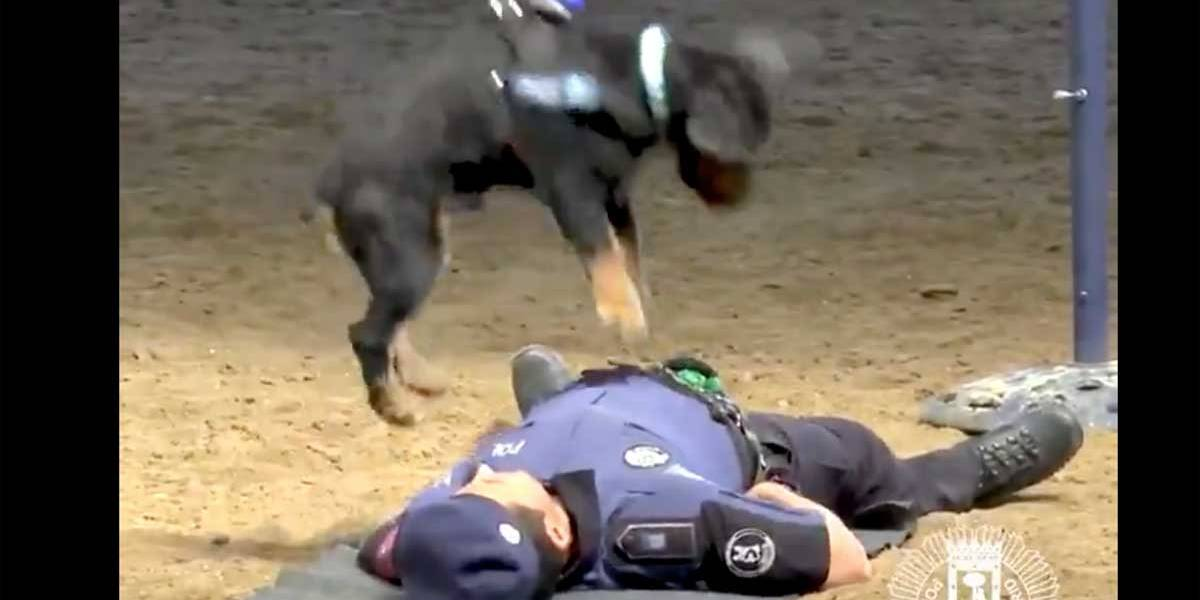 Cão policial 'aprende' a fazer reanimação cardiorrespiratória