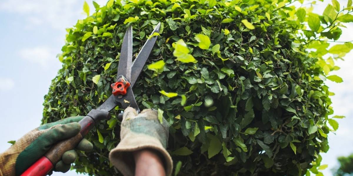 """Mató a su vecino porque presuntamente """"cortó las ramas de un árbol"""" de su propiedad"""