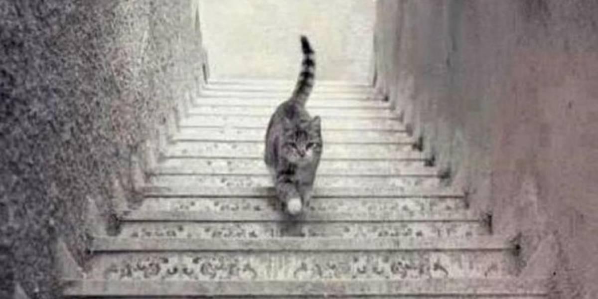 Este gato está subindo ou descendo a escada? Resposta revela como você encara os problemas da sua vida