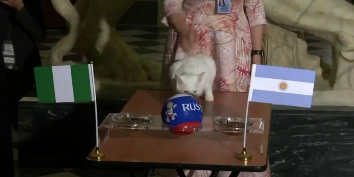 VIDEO: Gato Aquiles predice eliminación de Argentina del Mundial