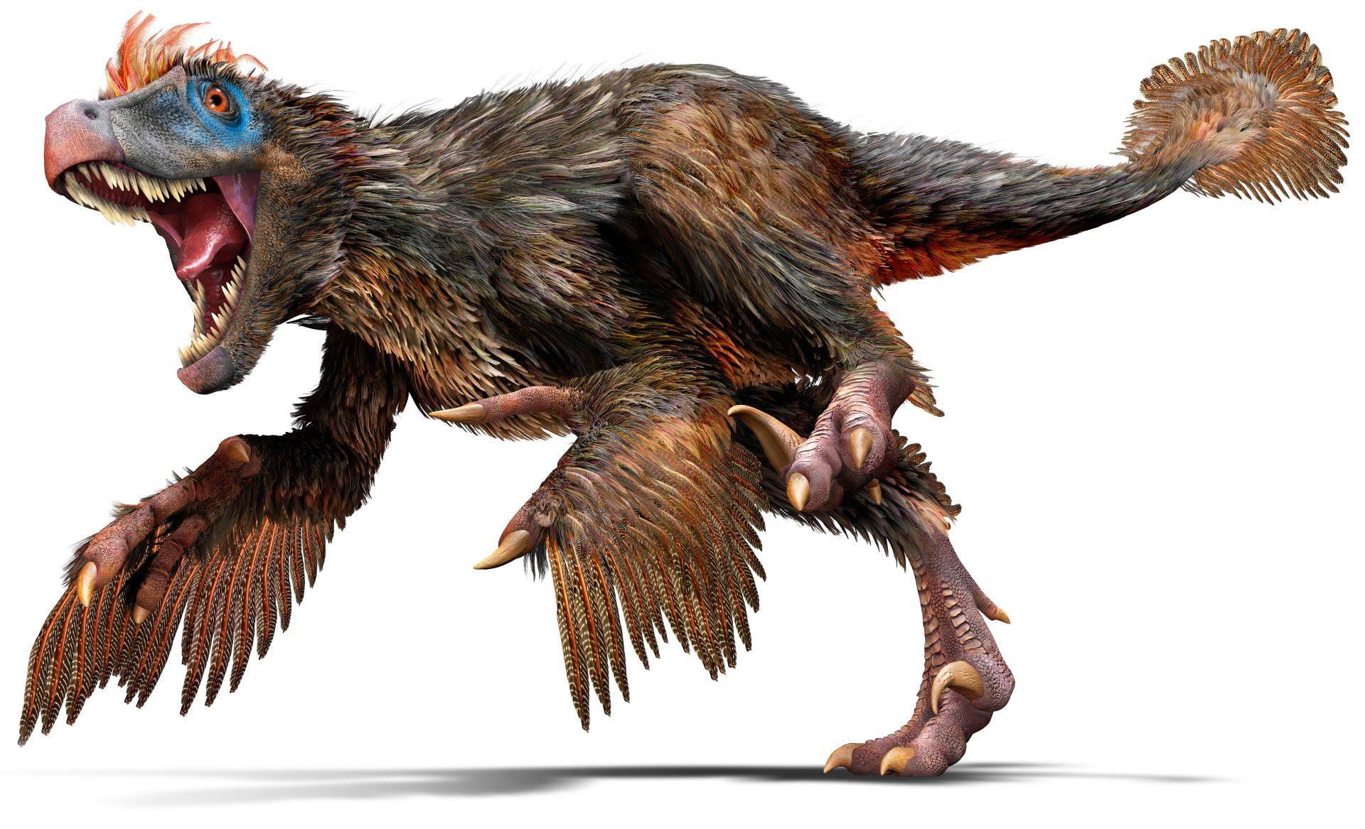Velociraptor real
