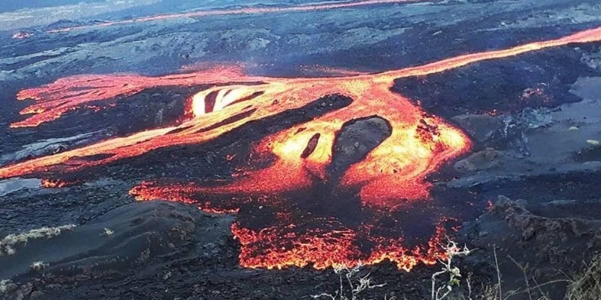 Descartan efectos a tortugas gigantes por erupción del volcán Sierra Negra, Galápagos