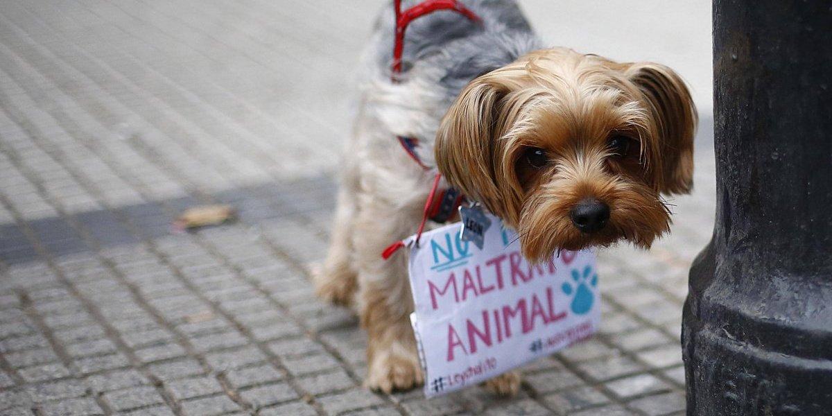 Marcha contra el maltrato animal deja adorables postales de perritos pidiendo que respeten a sus hermanos
