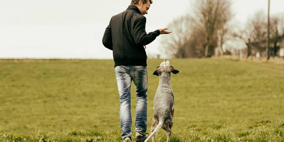 Se abren inscripciones para curso gratuito de capacitación en adiestramiento canino
