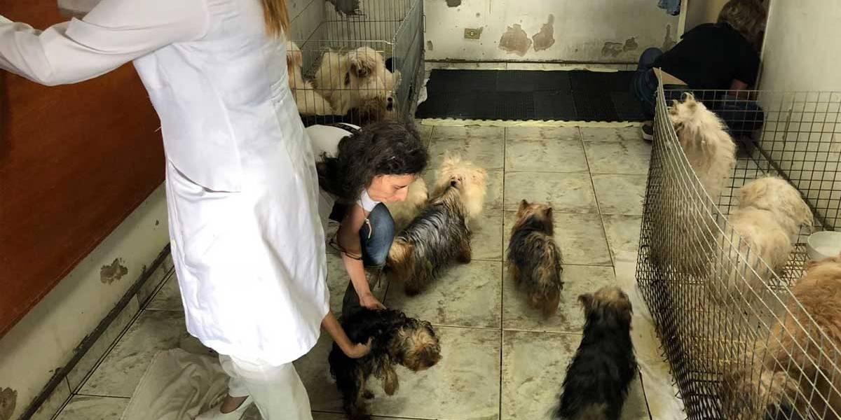 Canil clandestino mantinha 116 cães em local sujo e sem comida