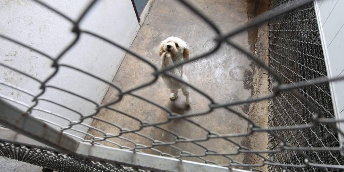 ¿Quiere ayudar a los animales en Bogotá?, conviértase en voluntario