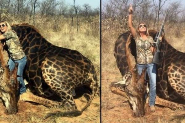 Leones devoran a cazadores que querían arrancar colmillos a rinocerontes