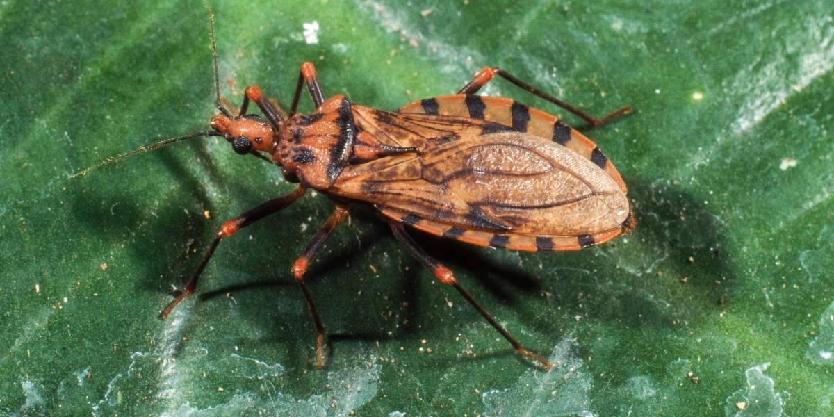 Unión Europea financiará investigación sobre el mal de Chagas en Chile