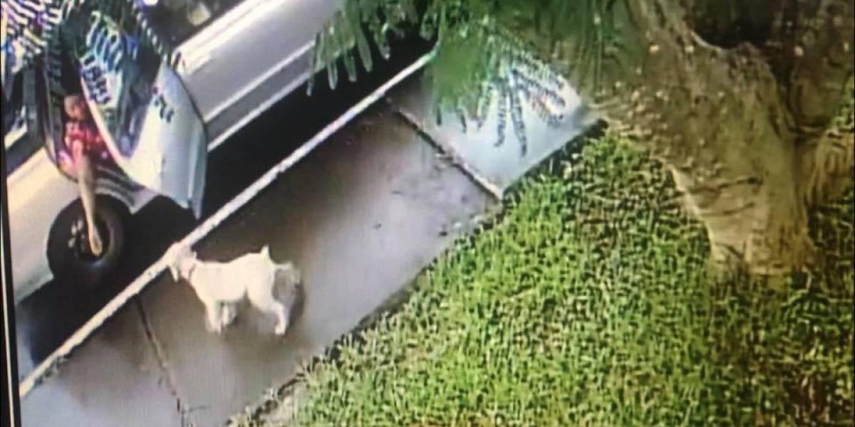 Comparte video de cómo se llevaron a su perrito y pide ayuda para localizarlo