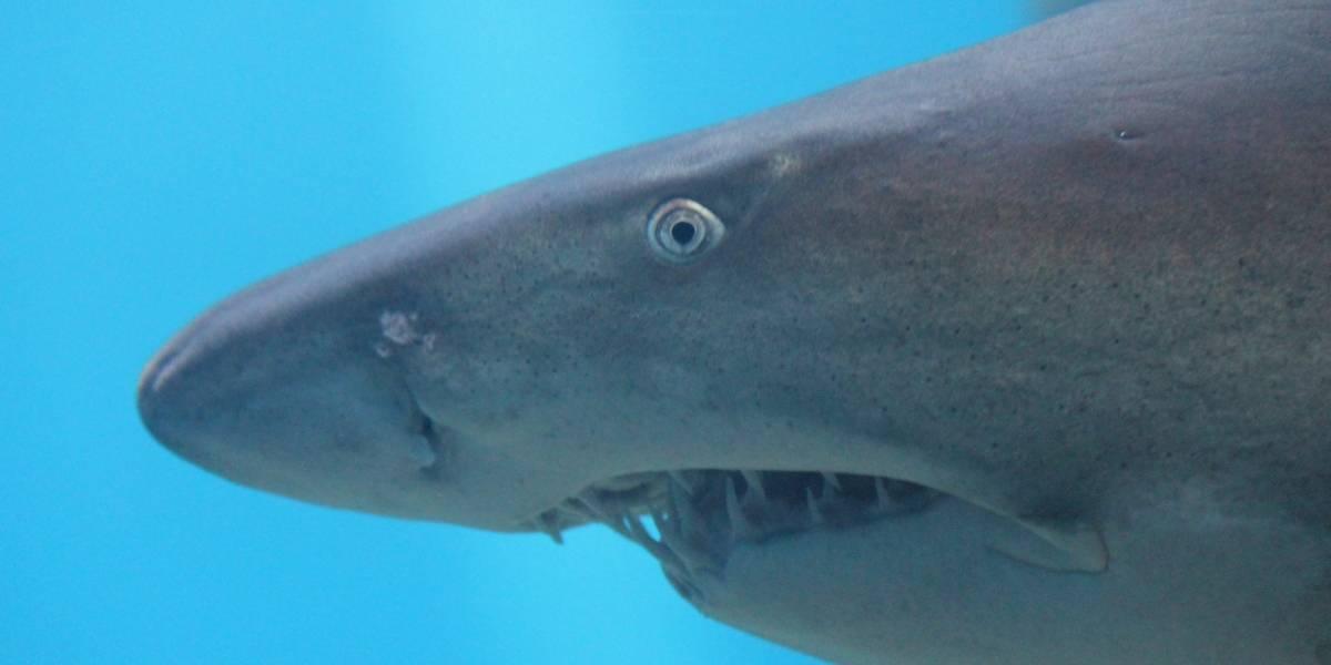 El violento momento en que mujer es mordida y arrastrada hacia el mar por alimentar a un tiburón con la mano
