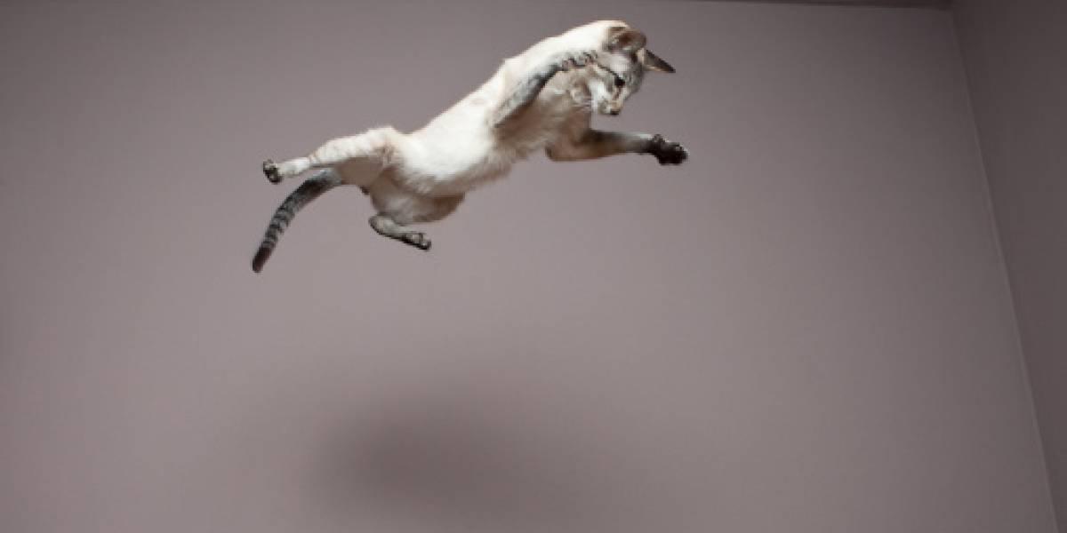 ¿Quería probar la teoría de las siete vidas?: abuelito fue detenido por empeñarse en hacer volar a su gato