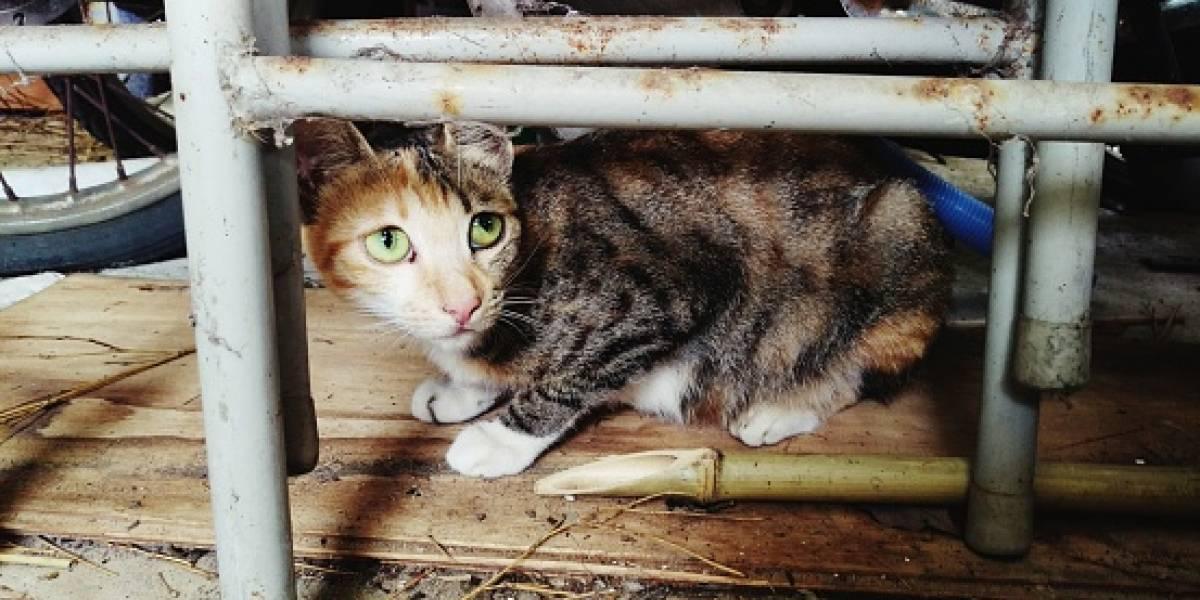 Prendió fuego a su casa y se encuentra desaparecido: gatito provocó incendio con su cola por acercarse a la estufa
