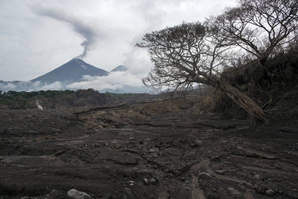 Algunos árboles aún están de pie cerca de la lava expulsada por el Volcán de Fuego en San Miguel Los Lotes, Guatemala. (AP Foto/Rodrigo Abd)