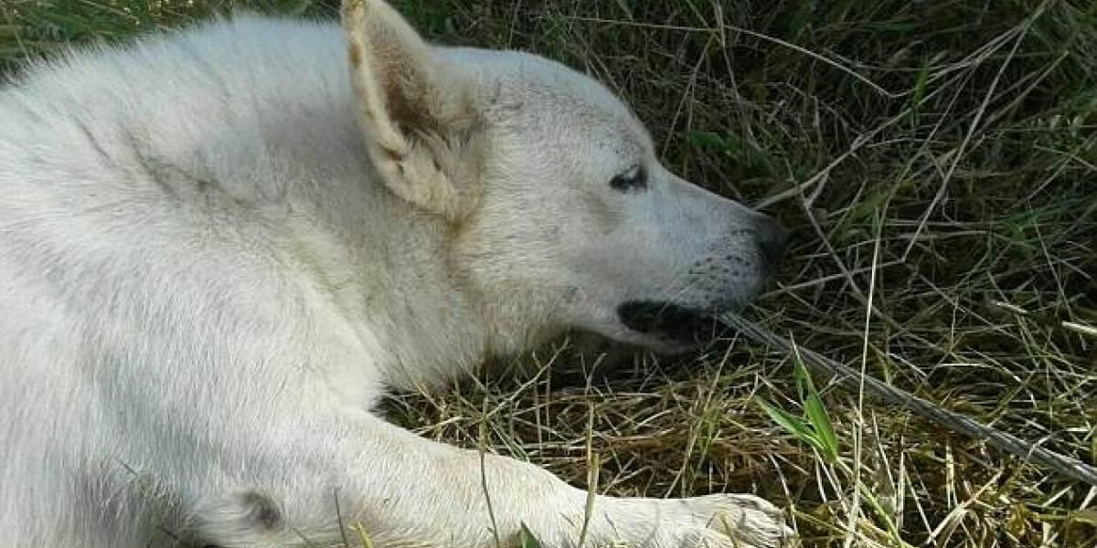 Mordió el cable y recibió toda la descarga: perrito sacrificó su vida para salvar a su dueño de morir electrocutado