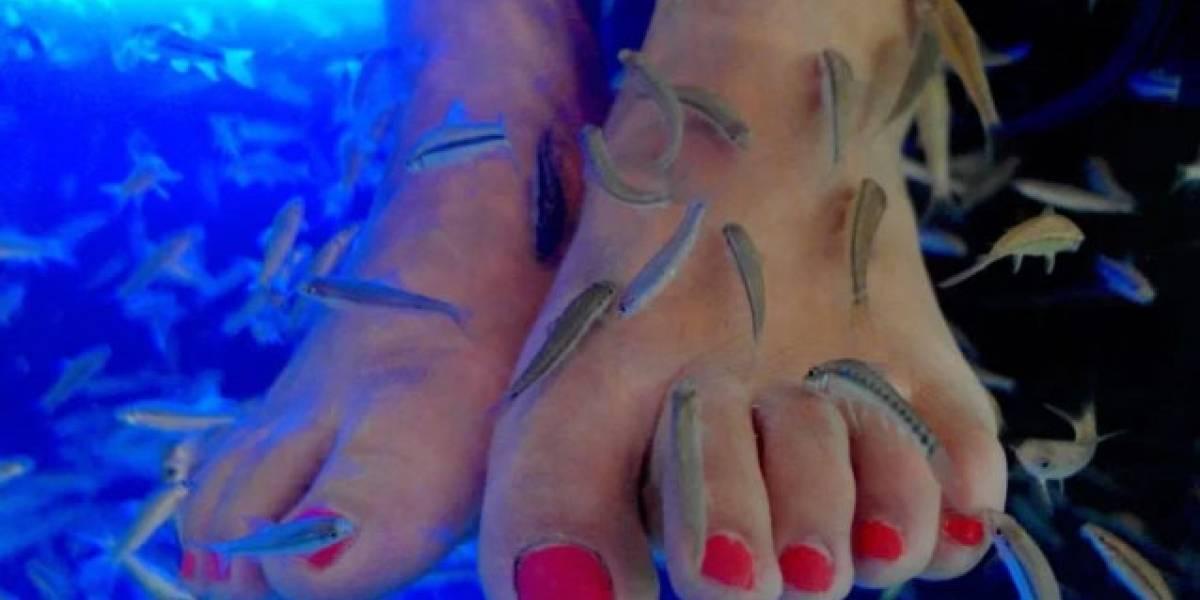 Mujer pierde las uñas de los pies por hacerse una pedicura con peces