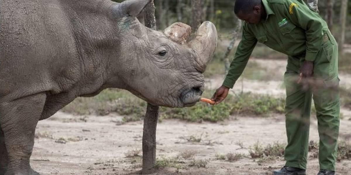 La técnica que puede ayudar a salvar a la especie de la que no quedan machos
