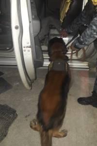 localizan paquetes con posible droga en Zacapa