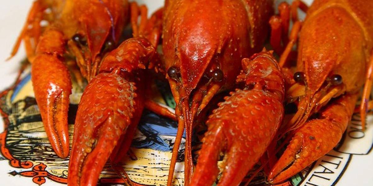 Amazon vende lagostas vivas online no Reino Unido