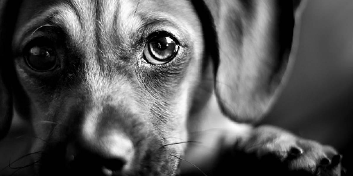 Hombre asegura que regalaron a su perro donde lo dejó para que lo cuidaran