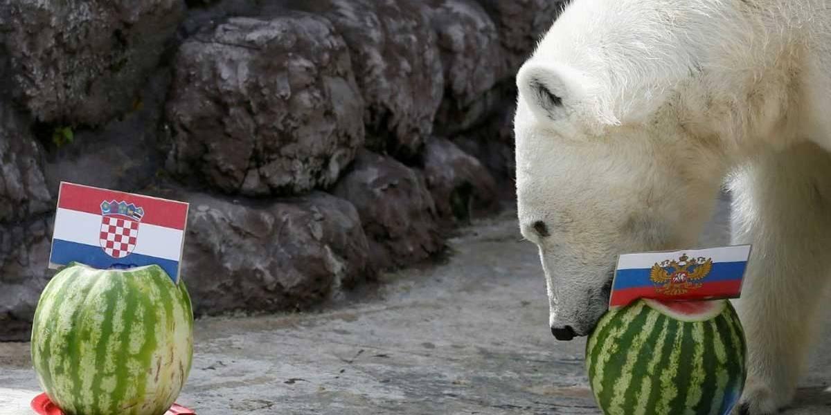 Copa do Mundo: ursa vidente prevê a vitória da Rússia sobre a Croácia