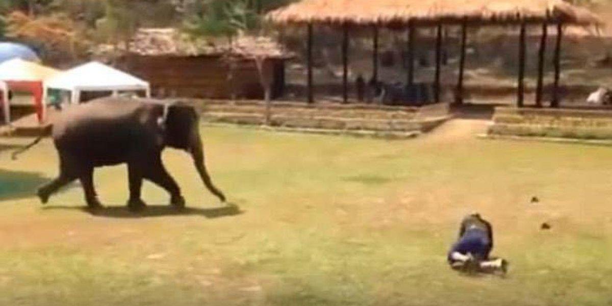 Elefante ajuda cuidador 'atacado' e vídeo faz sucesso nas redes sociais