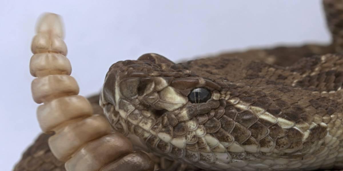 Buscan a serpiente de tres metros que se está comiendo las mascotas en Cali