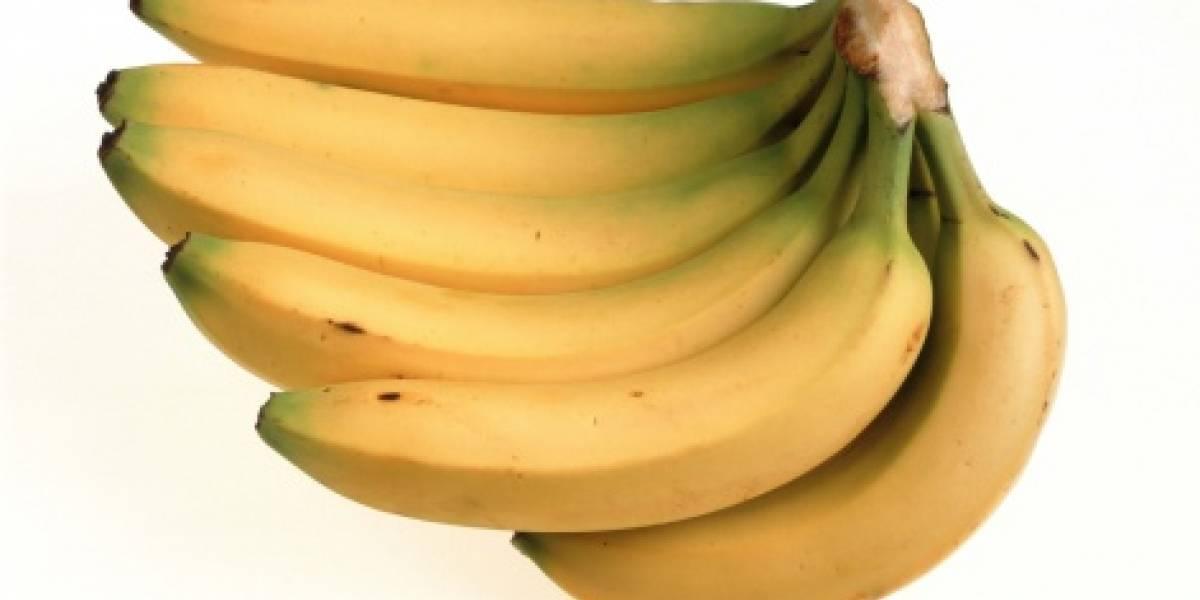 Alerta mundial: los plátanos están al borde de la extinción por culpa de mortal enfermedad tropical que azota al planeta