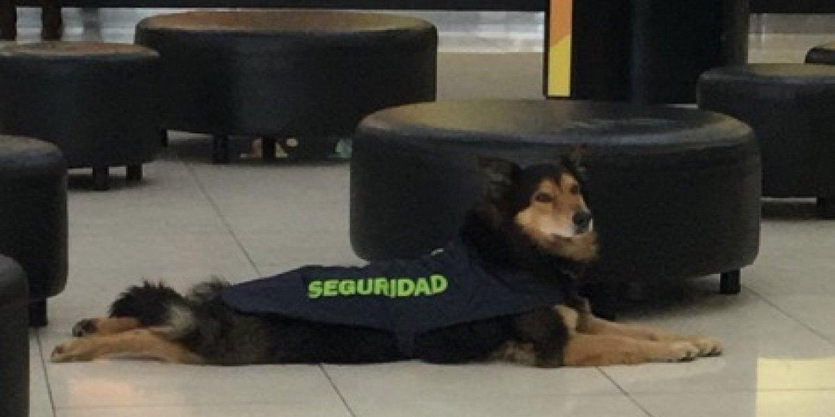 El mejor guardia que existe: perrito que resguarda sucursal de empresa de telefonía en mall capitalino se gana el amor de las redes sociales