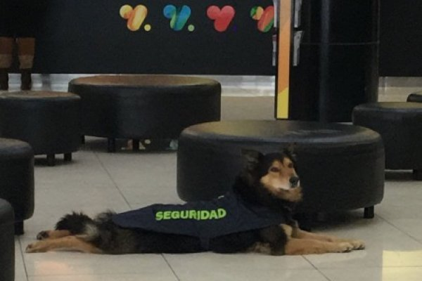 perrito guardia